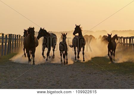The herd of horse  in the rays of a calling