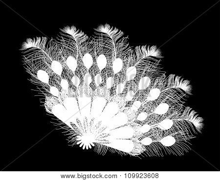 illustration with feather fan isolated on black background