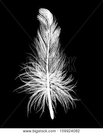 illustration with single white feather isolated on black background