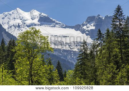 Swiss Alps Seen Through Forest In Blausee Or Blue Lake Nature Park In Summer, Kandersteg, Switzerlan