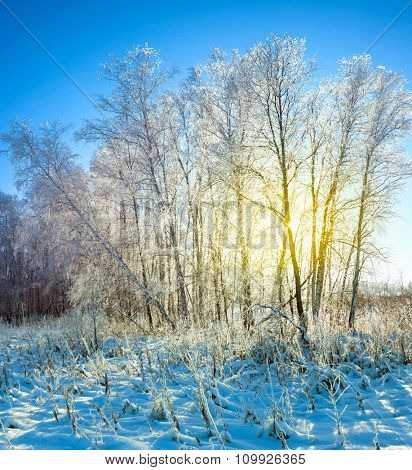 Beauty Sunrise in Snow Winter Forest