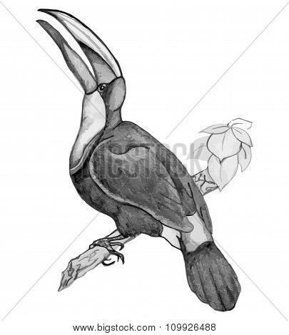 Bird Toucan On Branch - Pencil Drawing Of Hand