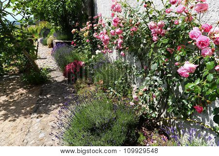 Pink Climbing Roses And Lavender On Typical Rural House Near Lake Geneva, Switzerland
