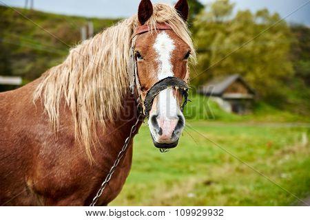 Horse With Beautiful Mane