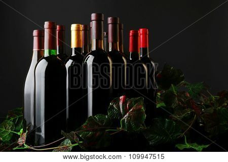 Wine bottles with grapevine on black background, close up