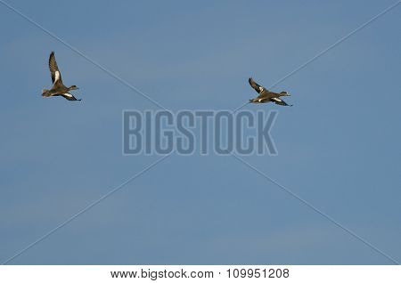 Two American Wigeon Flying In A Blue Sky