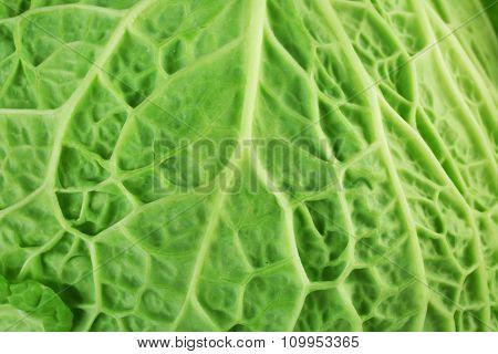 Leaf of savoy cabbage background, macro