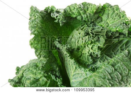 Savoy cabbage isolated on white background, close up