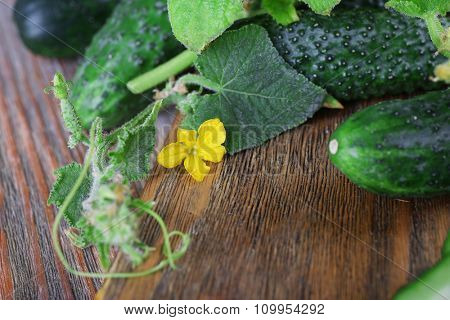 Cucumbers on wooden background, close up
