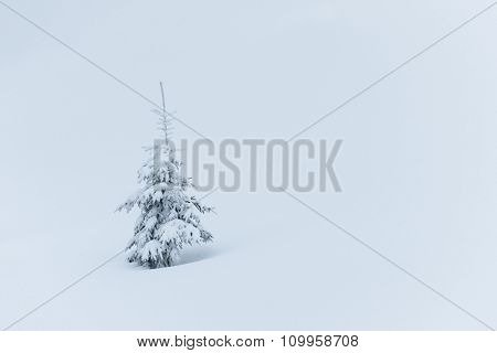 Small tree in snow. Winter in forest