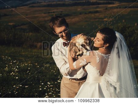wedding couple with cat  of carpathian mountain