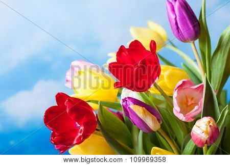 Spring background with colorful tulips