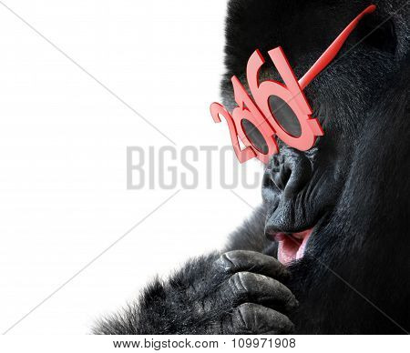 Gorilla with big red 2016 New Years glasses celebrating Year of the Monkey