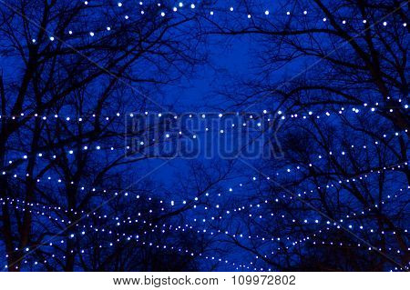 Abstract Tree Trunk Silhouettes Illuminated By Holiday Garlands