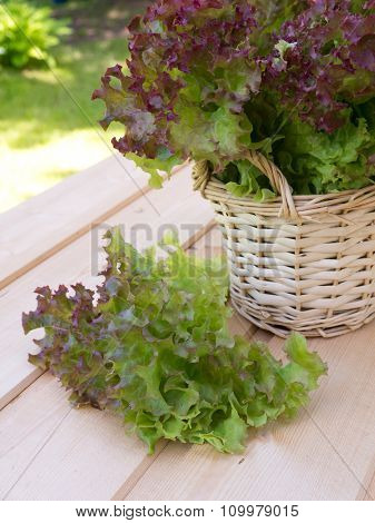 Salad In The Basket