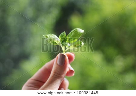 fragile sprout in hand