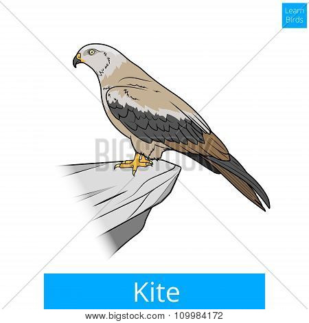Kite bird learn birds educational game vector