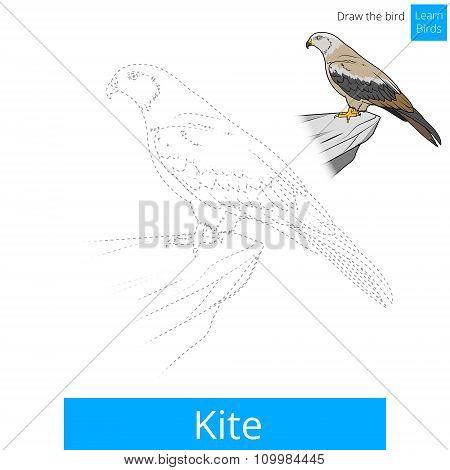 Kite bird learn birds coloring book vector