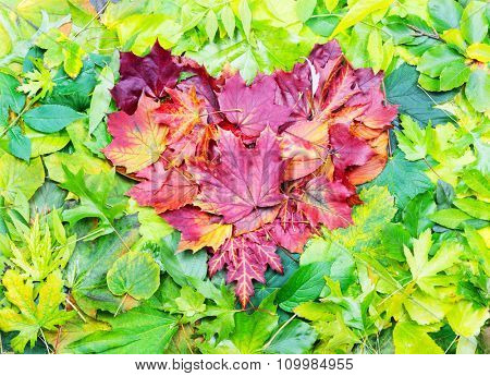 Heart shape made of red autumn leaves on green leaves