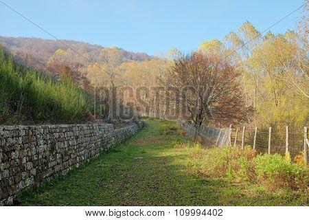 autumnal path around Cartolari Lake in Nebrodi Park, Sicily