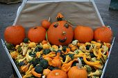 picture of cucurbitaceous  - colorful collection of gourds in various shapes and sizes - JPG