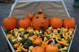 stock photo of cucurbitaceous  - colorful collection of gourds in various shapes and sizes - JPG