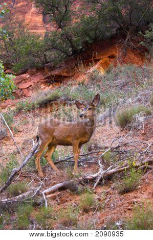 Deer In A Wild