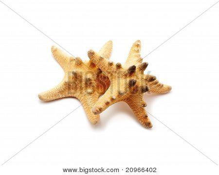 Spiked Sea Stars