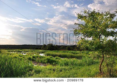 Landscape (new)