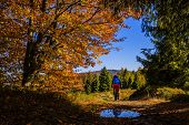 Mountain biker cycling in autumn mountains forest landscape. Man cycling MTB flow trail track. Outdo poster