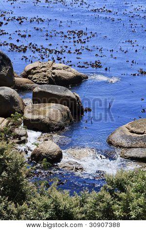 Closeup of Kelp and boulders