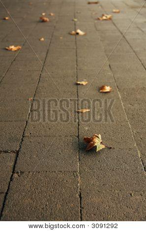Sidewalk In Autumn