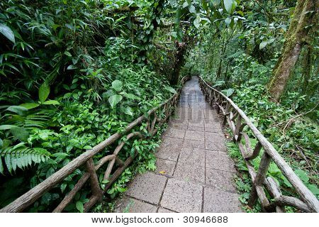 Trail Through Rainforest