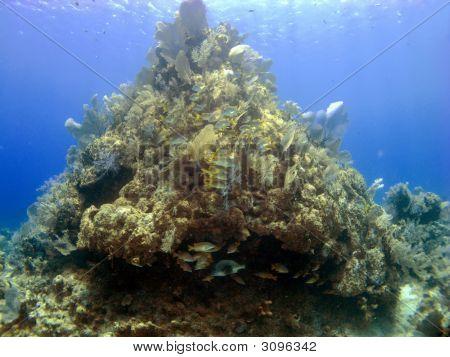 Coral Head On Cayman Brac
