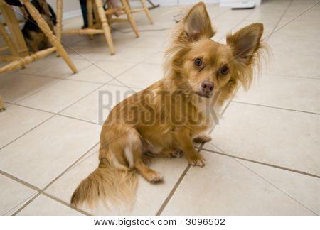 Curious Sitting Dog