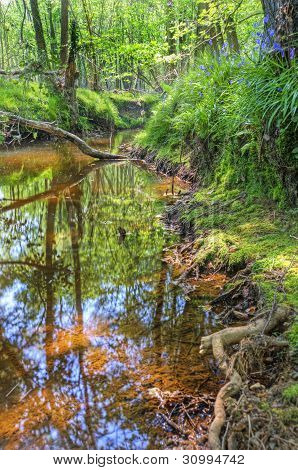 Low Point Of View Along Stream Running Through Forest With Deep Vibrant Colors