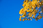 Colorful Tree Branches In Sunny Forest, Autumn Natural Background.orange Autumn Trees Tops Against B poster