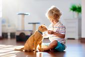 Child Playing With Cat At Home. Kids And Pets. poster