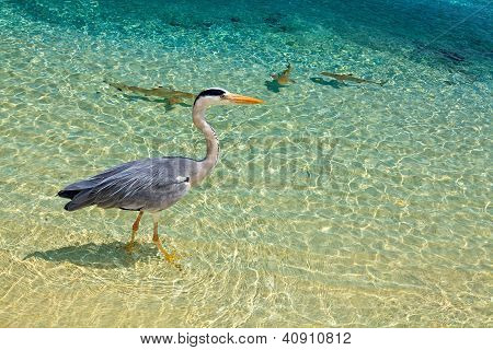 Bird And Baby Sharks
