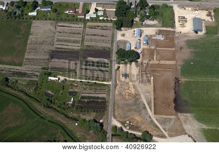 aerial view of a tree farm and a cattle feedlot