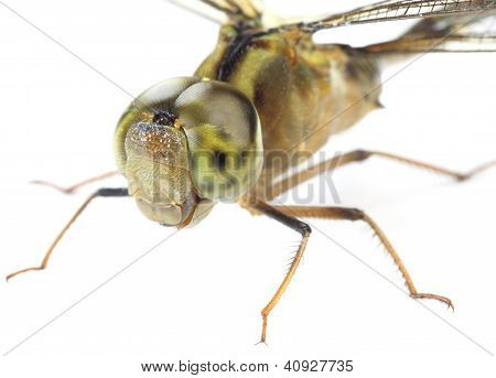 Macro of a Dragonfly over white background