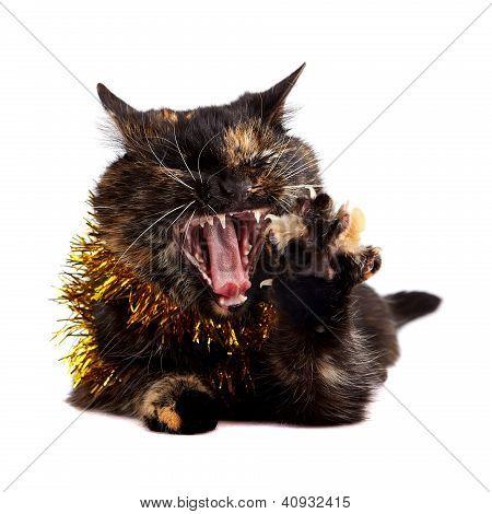 Mewing Cat