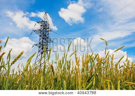 Wheat Field And Electrical Powerline In Summer Day
