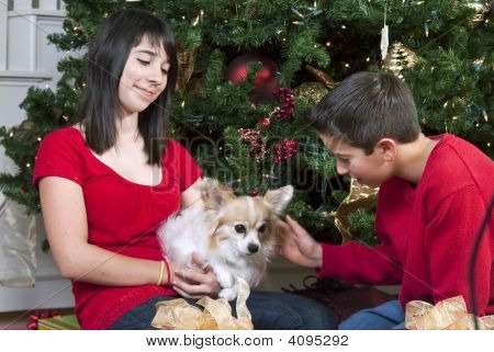 Christmas Time And Pet
