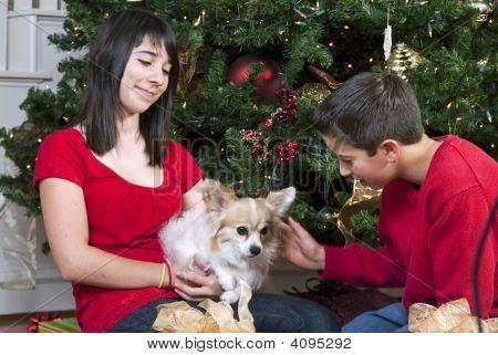 Christmas Time And Pet