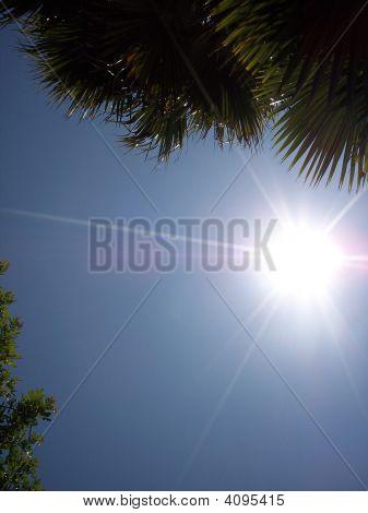 Sunshot Sun Flare