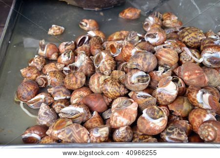 Whelks At The Fresh Market