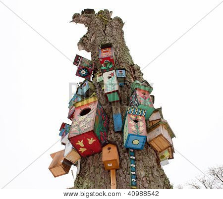 Old Dead Tree Trunk Colorful Bird Nest Box Hang