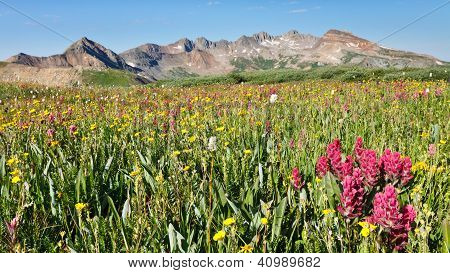 Wildflowers Galore On Alpine Meadow