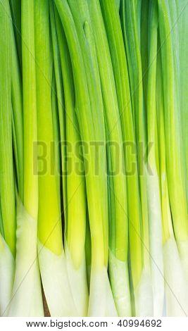 Onions Napiform